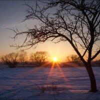 Лучи уходящего солнца :: Елена Ерошевич