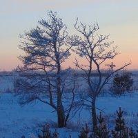 Деревья :: Vladikom