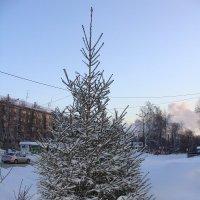 елочка в снегу :: Наталья Меркулова