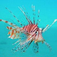 Рыбка в море :: Андрей Sev