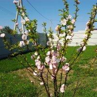 весна :: Евгений Платонов