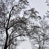 Из лесу :: Мария Богуславская