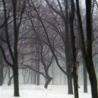 Туман :: Дарина Mads