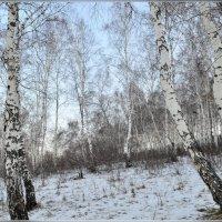 В январе :: galina tihonova