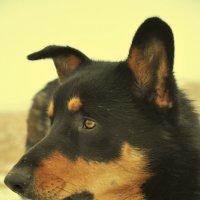 Собака :: Вероника Подрезова