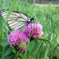 Бабочка :: Gu Safina