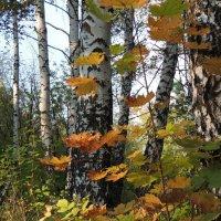 В  лесу :: Вик Токарев