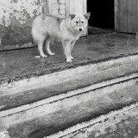 собака :: Юлия Закопайло