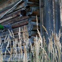 вымирающие деревни :: gribushko грибушко Николай