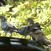 Фонтан и голуби... :: Владимир Секерко