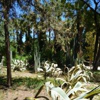 Природа Кипра :: Ольга Мишустина