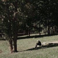 Одиночество... :: Анна Хотылева