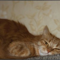 Маша засыпает :: Юрий Клишин