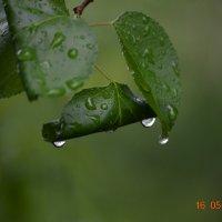 После дождя :: Игорь Д