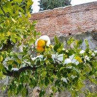 Зимние апельсины :: Ирина