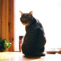 У каждого должно быть фото с котом :: Ислам Абдукапаров