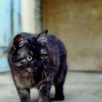 на охоте :: Ирина Зотченко