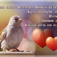 Воробей желает Вам :: Андрей Поляков