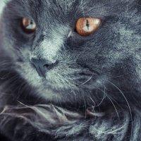 My cat. :: Александра Салыжина