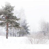 Морозко :: Елена Соловьева
