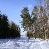 Зимний лес. :: Lana