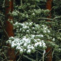 Соцветия зимы 2 :: Юрий