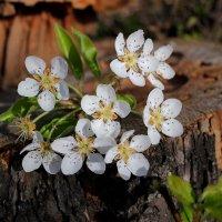 На сухом пенёчке выросли цветочки :: Dr. Olver