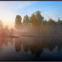 Нежность летнего утра. :: Nikita Volkov
