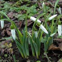 Весна в феврале :: Lara