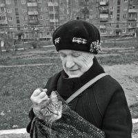 кот - непоседа :: Сергей Демянюк