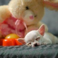 спят усталые игрушки ) :: Елена