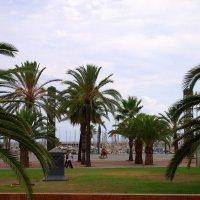 Помечтайте о лете, глядя на пальмы... :: ФотоЛюбка *