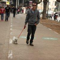 Sweet mini dog:) :: Ира Дунайцева