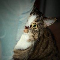 А пылесос уже ушел? :: Андрей Звягин