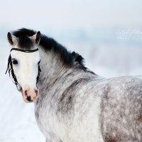 horse :: Elya Vatel