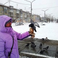 ветер, снег, холодина, голуби... :: Ольга Чазова