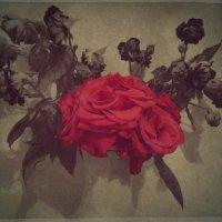 Розы :: Ирина Петрушкова