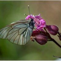Бабочка. :: Saniya Utesheva