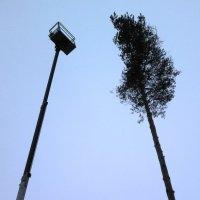 металл vs дерево :: Андрей Герасимов