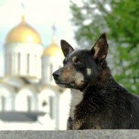 Сторож храма! :: Владимир Шошин