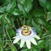 оригинальный цветок :: Андрей Тер-Саркисов