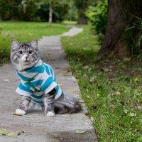 Котик :: Alex_miao Оля
