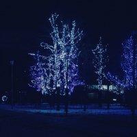 Деревья из сказки :: Светлана Колчина