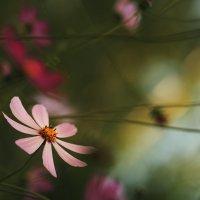 Цветы :: Gulfiya Sunny photos