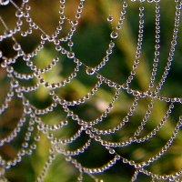 Роса на паутине :: Иван Клещин