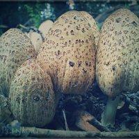 грибы :: Ирина Петрушкова
