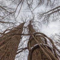 Жизнь растений :: Petr Shostak