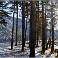 В лучах зимнего солнца :: galina tihonova