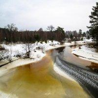 Запахло весной... :: Дмитрий Янтарев