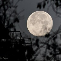 Луна :: Йеннифэр Шурсен